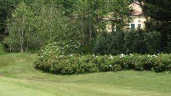 Hortensia_golf_bogogno_05