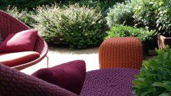 Hortensia_Tnat_GAN_03